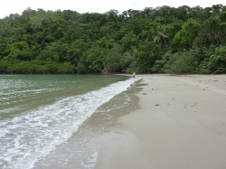 Cape Tribulation - here the tropical jungle hits the Great Barrier Reef via the mangrove swamps and beach.