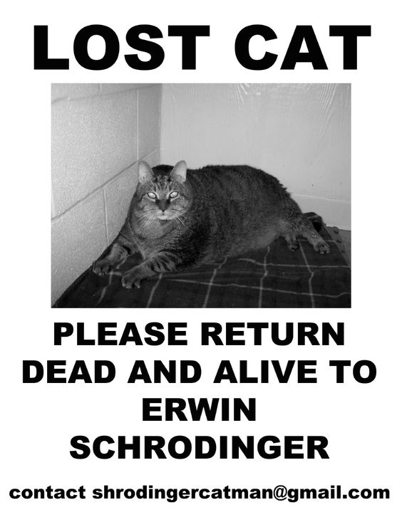 Lost Cat. please return dead and alive to Erwin Schródinger
